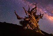 tree-stars-thumb